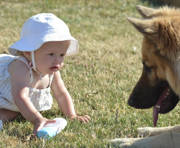 Introducing Dogs To Babies and Children